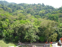 View of the rainforest surrounding from the Temple of the Cross